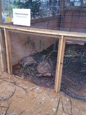 tortues de savane au mini zoo du sita 2018